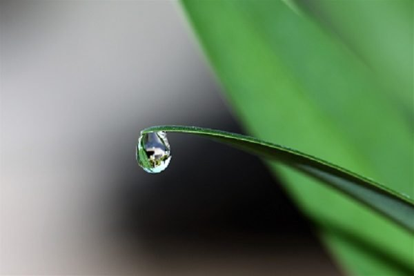 levels of love the dewdrop